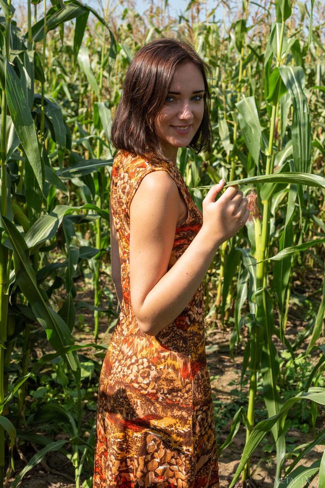 Где то в кукурузном поле